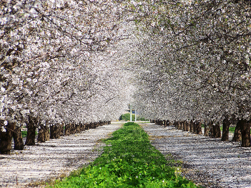 Almonds Slide 1 replaces current photo of Almond Trees